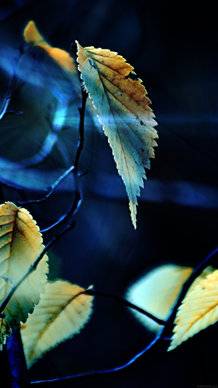 iPhonepapers.com-Apple-iPhone8-wallpaper-mm40-fall-tree-flower-leaf-sorrow