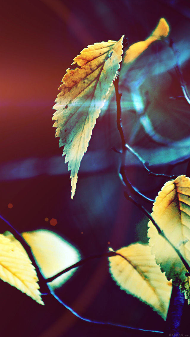 freeios8.com-iphone-4-5-6-plus-ipad-ios8-mm41-fall-tree-flower-leaf-sorrow-flare