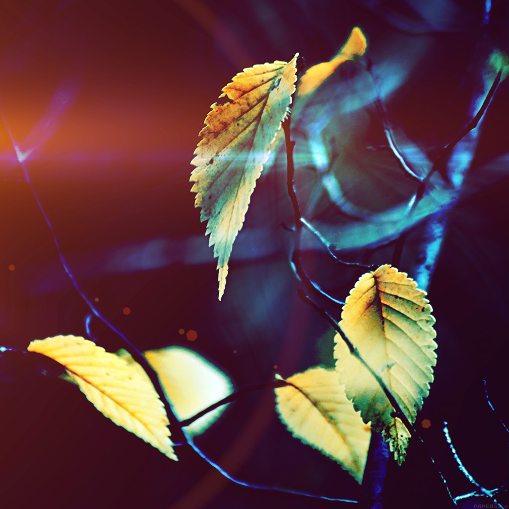 wallpaper-mm41-fall-tree-flower-leaf-sorrow-flare-wallpaper