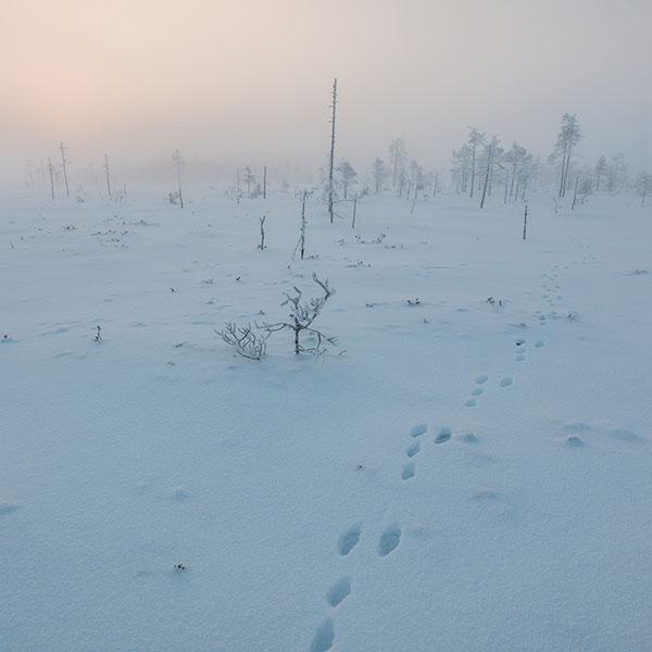 iPapers.co-Apple-iPhone-iPad-Macbook-iMac-wallpaper-mm49-snow-walk-winter-footprints-nature-mountain-wallpaper
