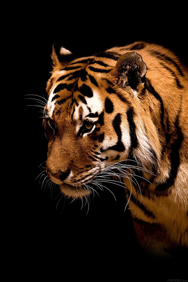 Mm81 Tiger Jk Dark Animal Love Nature Papers Co