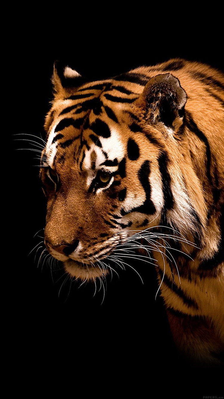iPhone6papers.co-Apple-iPhone-6-iphone6-plus-wallpaper-mm81-tiger-jk-dark-animal-love-nature