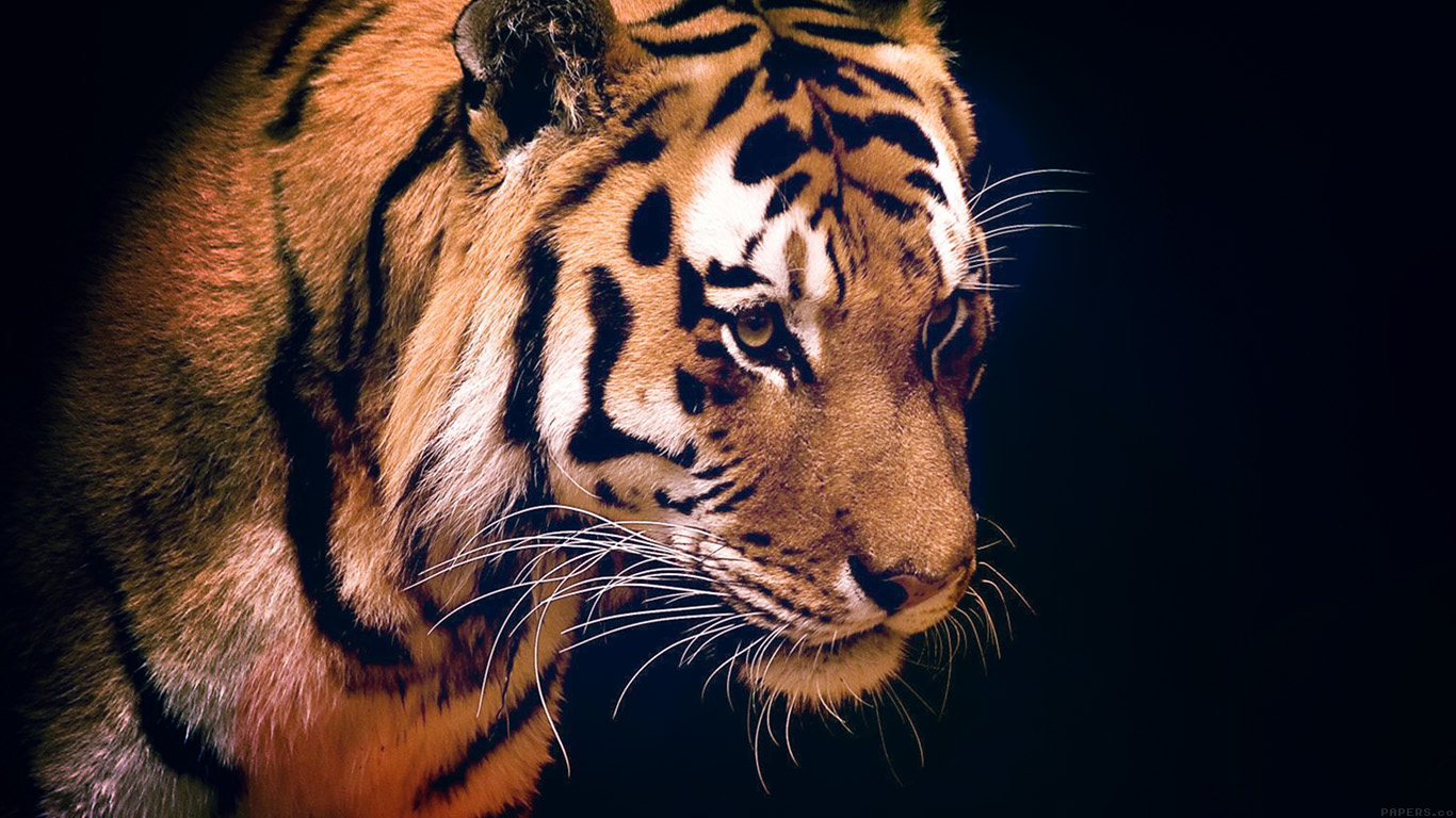 desktop-wallpaper-laptop-mac-macbook-air-mm82-tiger-dark-animal-love-nature-wallpaper