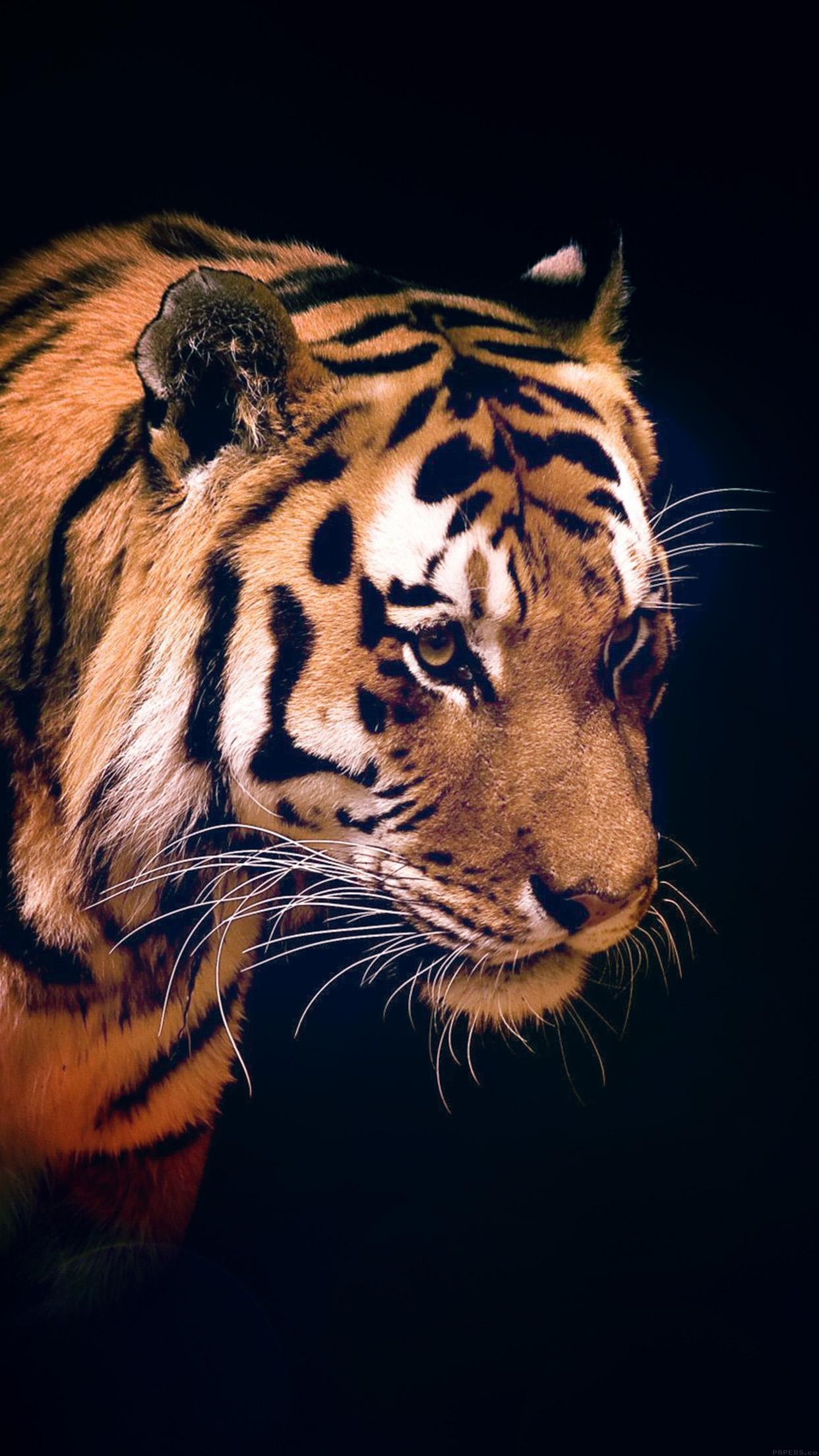 Mm82 Tiger Dark Animal Love Nature Wallpaper