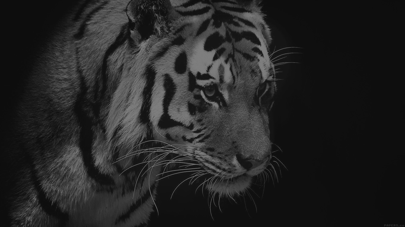desktop-wallpaper-laptop-mac-macbook-airmm83-tiger-dark-bw-animal-love-nature-wallpaper
