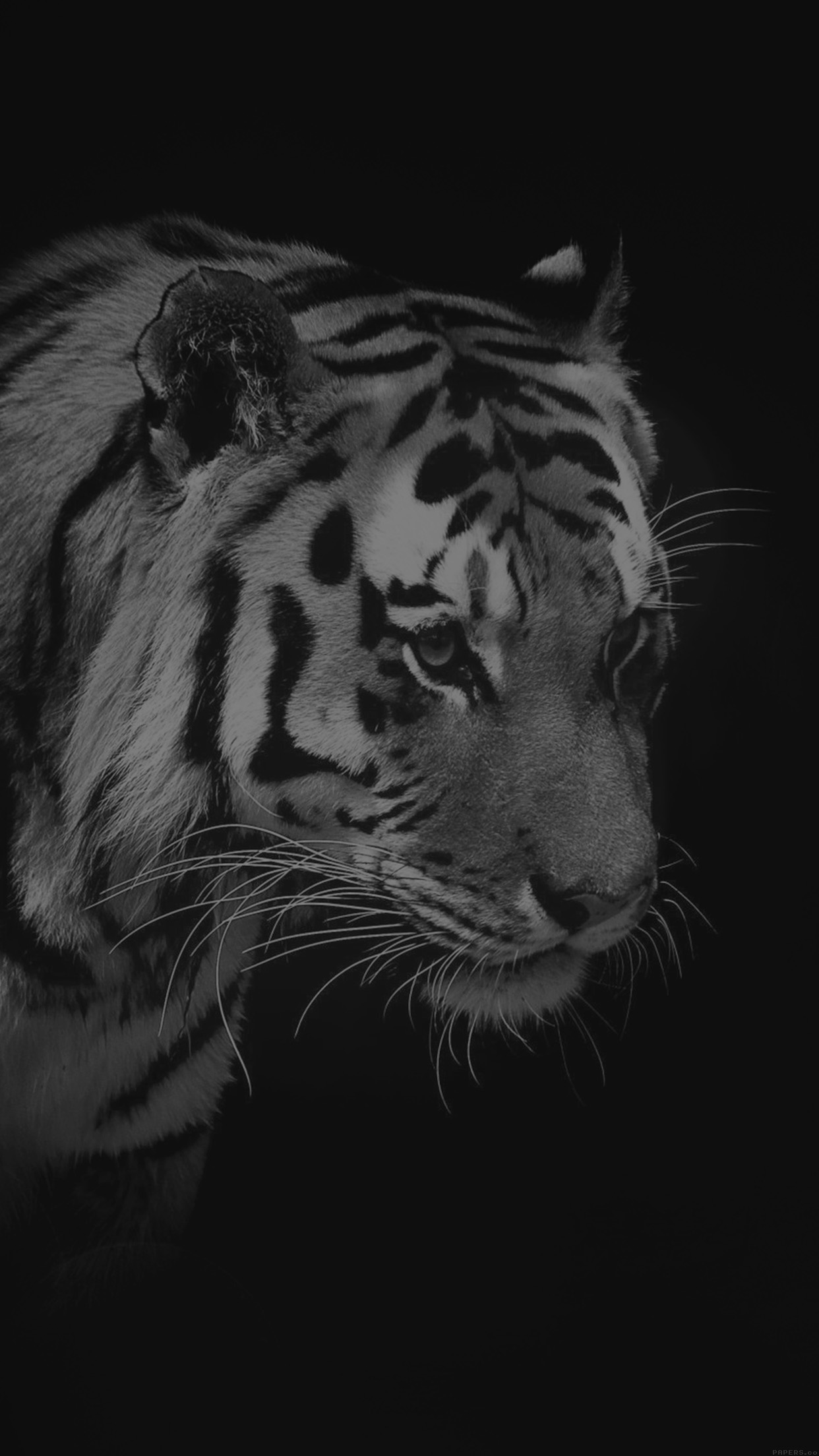 Iphone7papers Mm83 Tiger Dark Bw Animal Love Nature