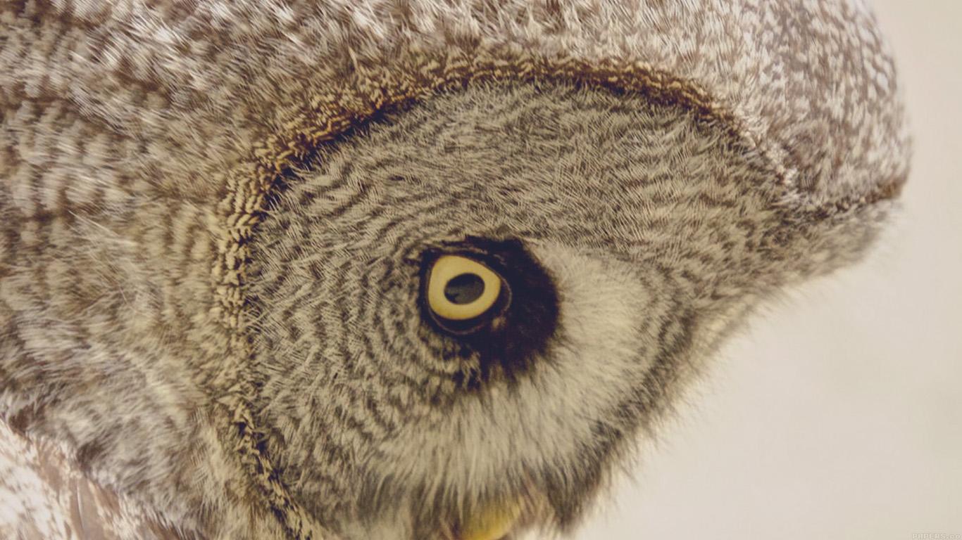 Wallpaper For Desktop Laptop Mm84 Owl Eye Animal Nature