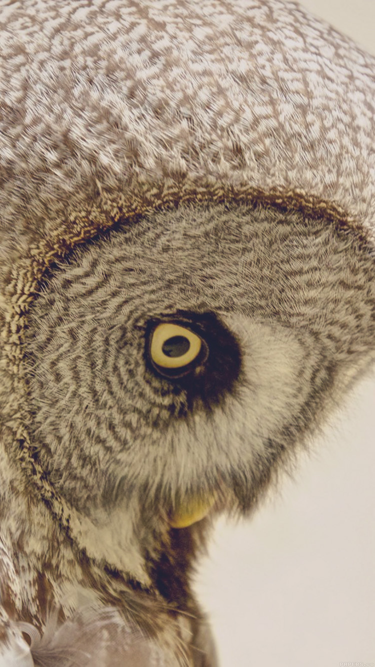 iPhone6papers.co-Apple-iPhone-6-iphone6-plus-wallpaper-mm84-owl-eye-animal-nature