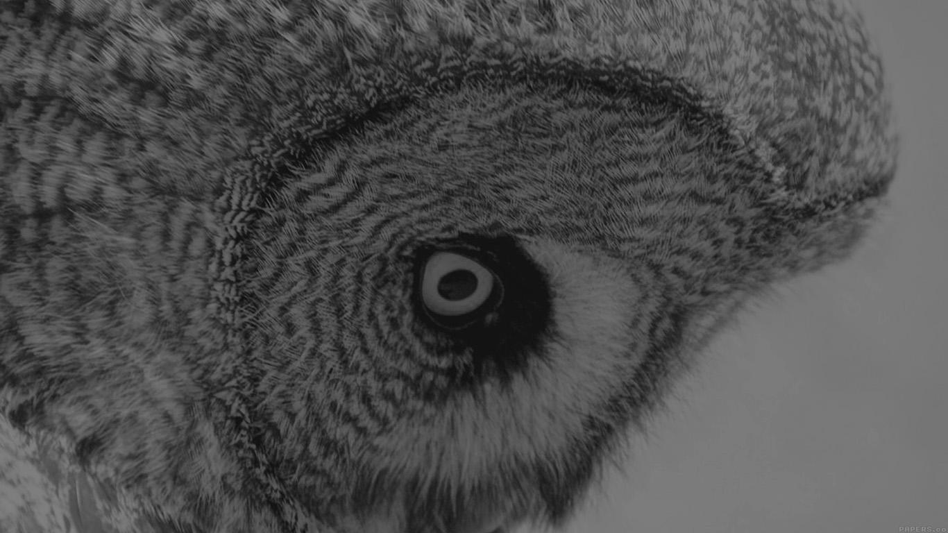 Wallpaper For Desktop Laptop Mm85 Owl Eye Bw Dark Animal Nature