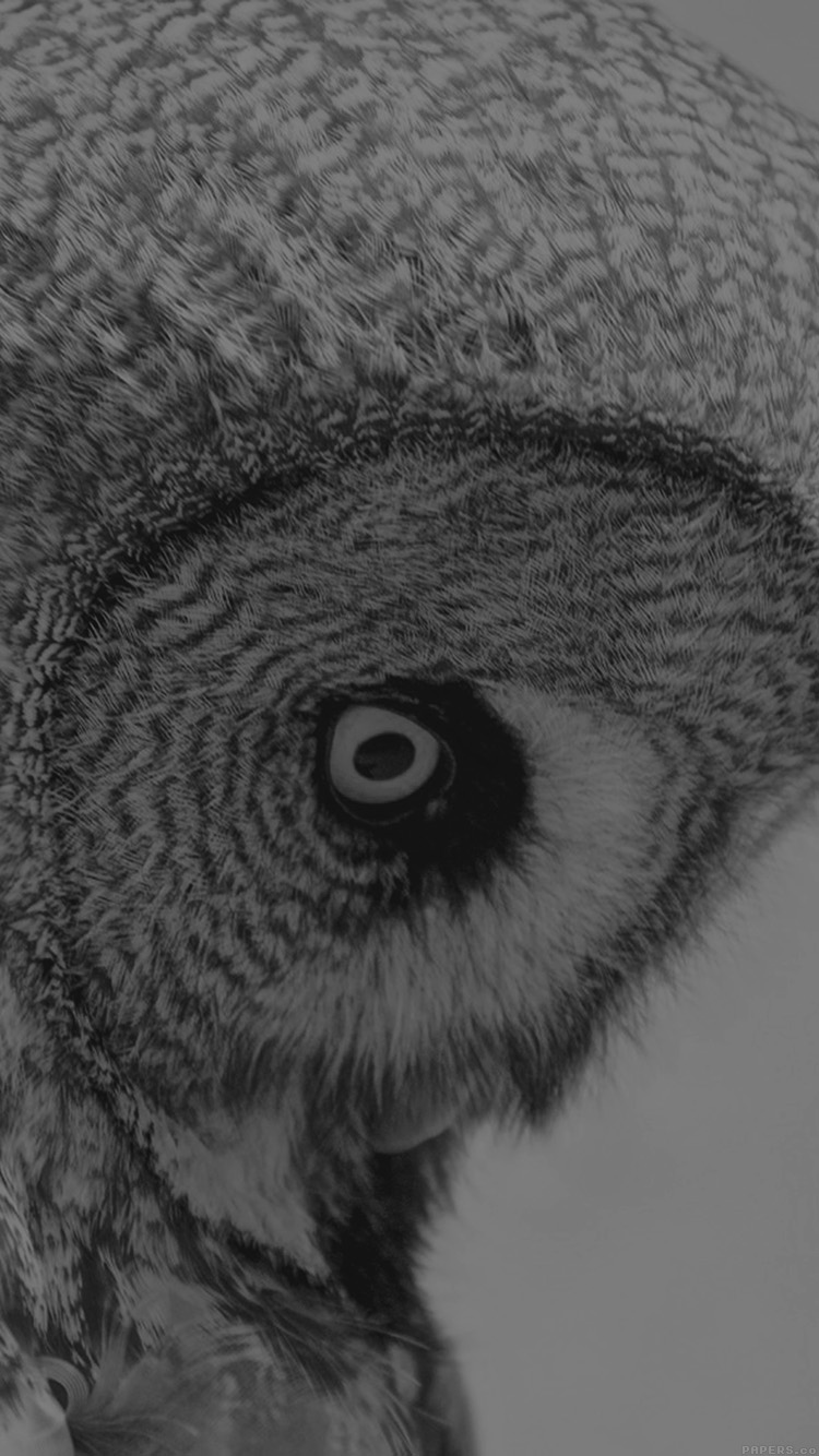iPhone7papers.com-Apple-iPhone7-iphone7plus-wallpaper-mm85-owl-eye-bw-dark-animal-nature