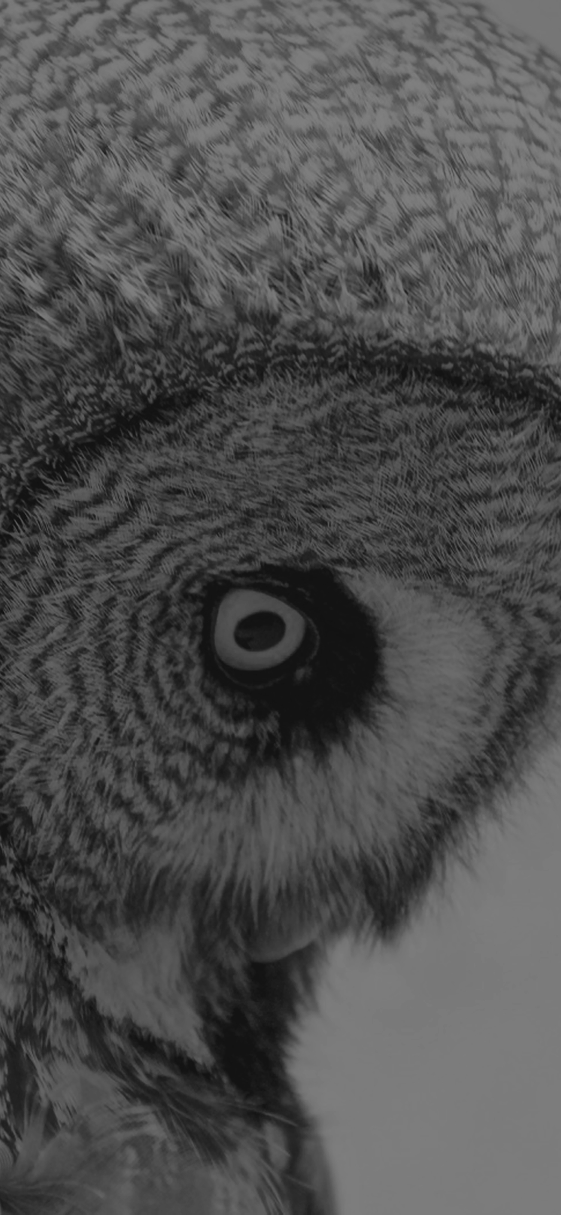 iPhoneXpapers.com-Apple-iPhone-wallpaper-mm85-owl-eye-bw-dark-animal-nature