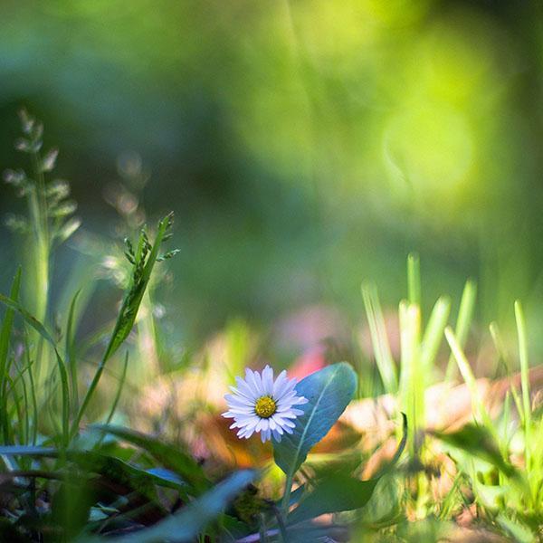 iPapers.co-Apple-iPhone-iPad-Macbook-iMac-wallpaper-mm92-green-lawn-flower-bokeh-nature-wallpaper