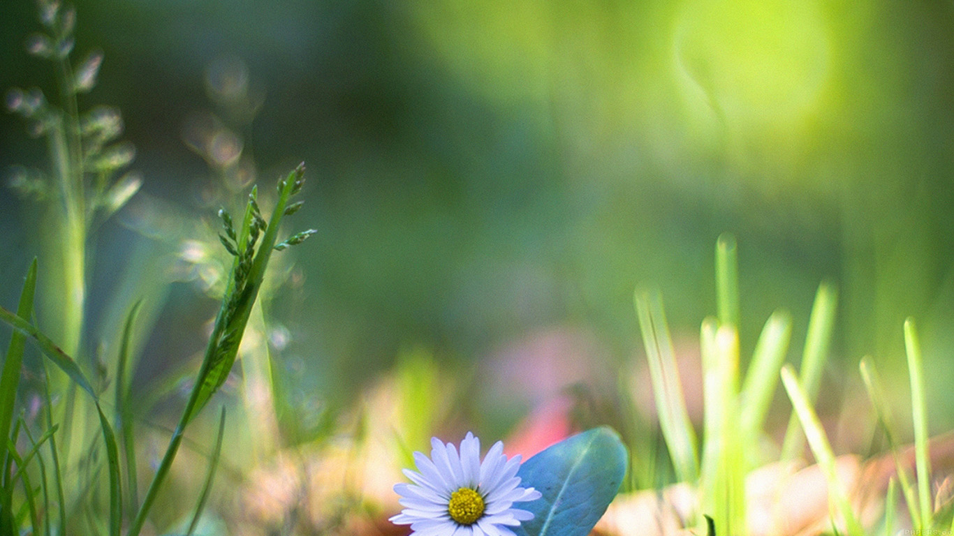 desktop-wallpaper-laptop-mac-macbook-airmm92-green-lawn-flower-bokeh-nature-wallpaper