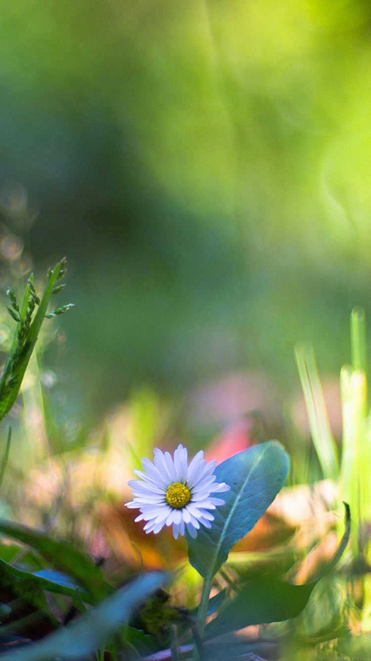 iPhonepapers.com-Apple-iPhone8-wallpaper-mm92-green-lawn-flower-bokeh-nature