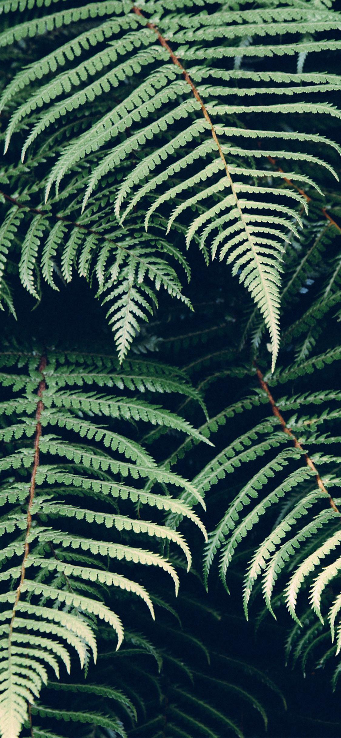 iPhoneXpapers.com-Apple-iPhone-wallpaper-mn05-leaf-green-nature-jan-erik-waider