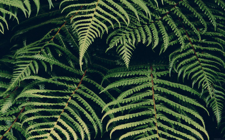 Mn06 Leaf Green Dark Nature Jan Erik Waider Wallpaper