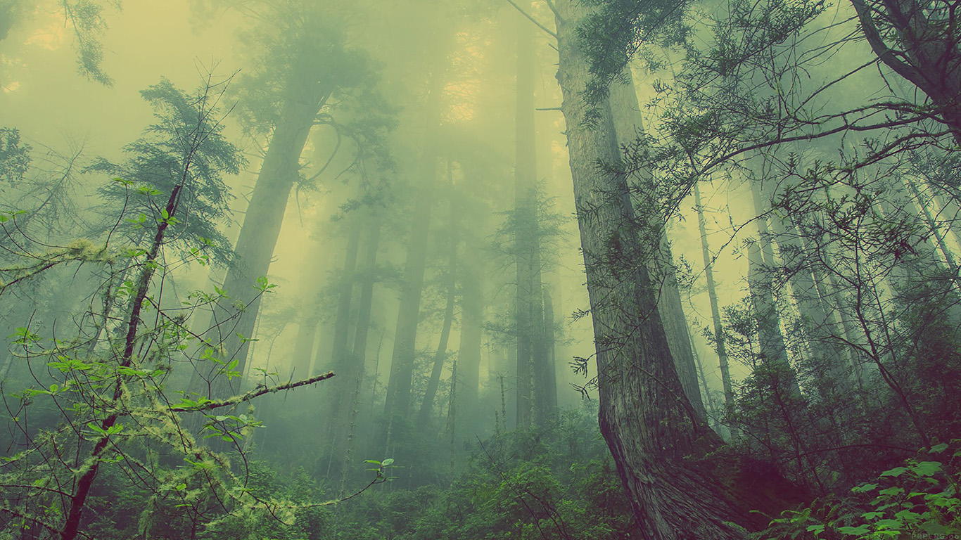 wallpaper-desktop-laptop-mac-macbook-mn31-forest-wood-fog-nature-green-wallpaper
