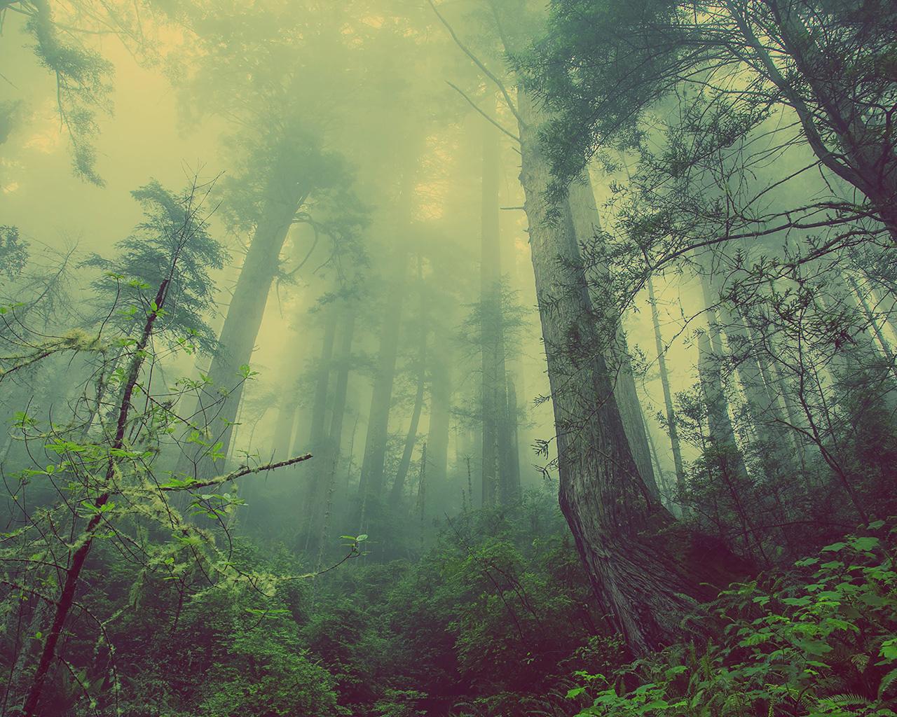 4k wallpaper nature redwoods - photo #9