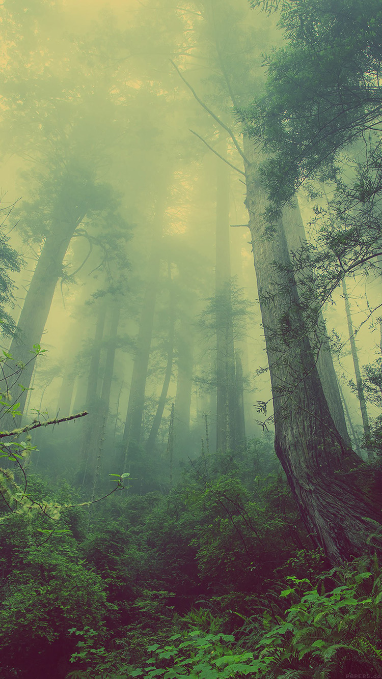 iPhone6papers.co-Apple-iPhone-6-iphone6-plus-wallpaper-mn31-forest-wood-fog-nature-green