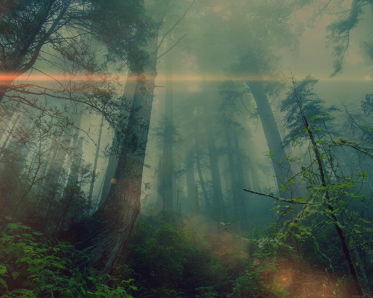 wallpaper for desktop, laptop | mn32-forest-wood-fog-flare ...