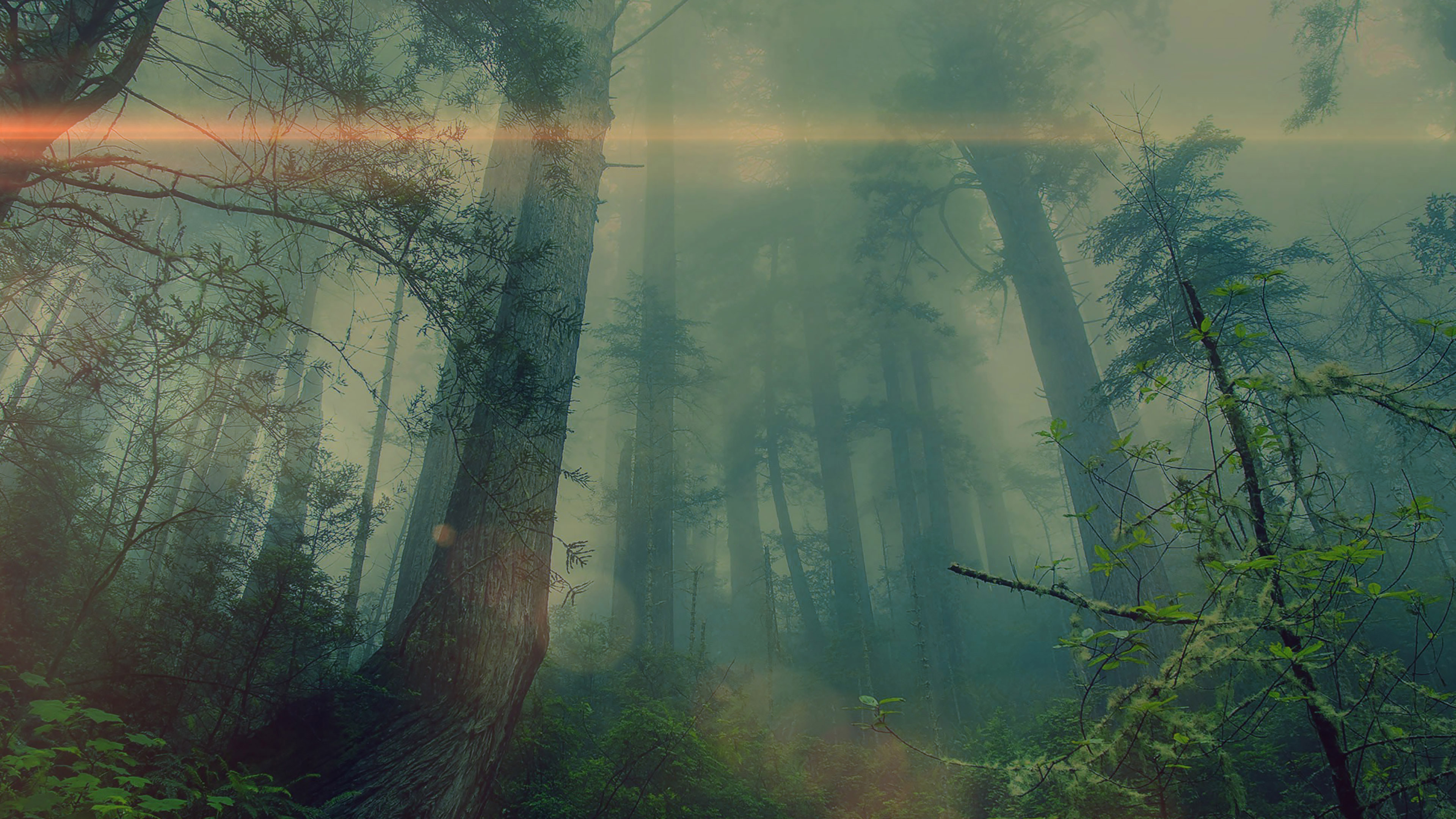 wallpaper for desktop, laptop | mn32-forest-wood-fog-flare ...