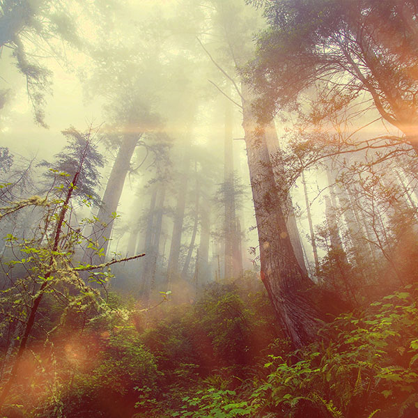 iPapers.co-Apple-iPhone-iPad-Macbook-iMac-wallpaper-mn33-forest-wood-fog-flare-red-nature-green-wallpaper