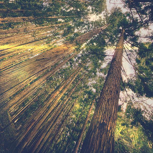 iPapers.co-Apple-iPhone-iPad-Macbook-iMac-wallpaper-mn45-in-forest-tall-tree-flare-green-kim-daniel-nature-wallpaper