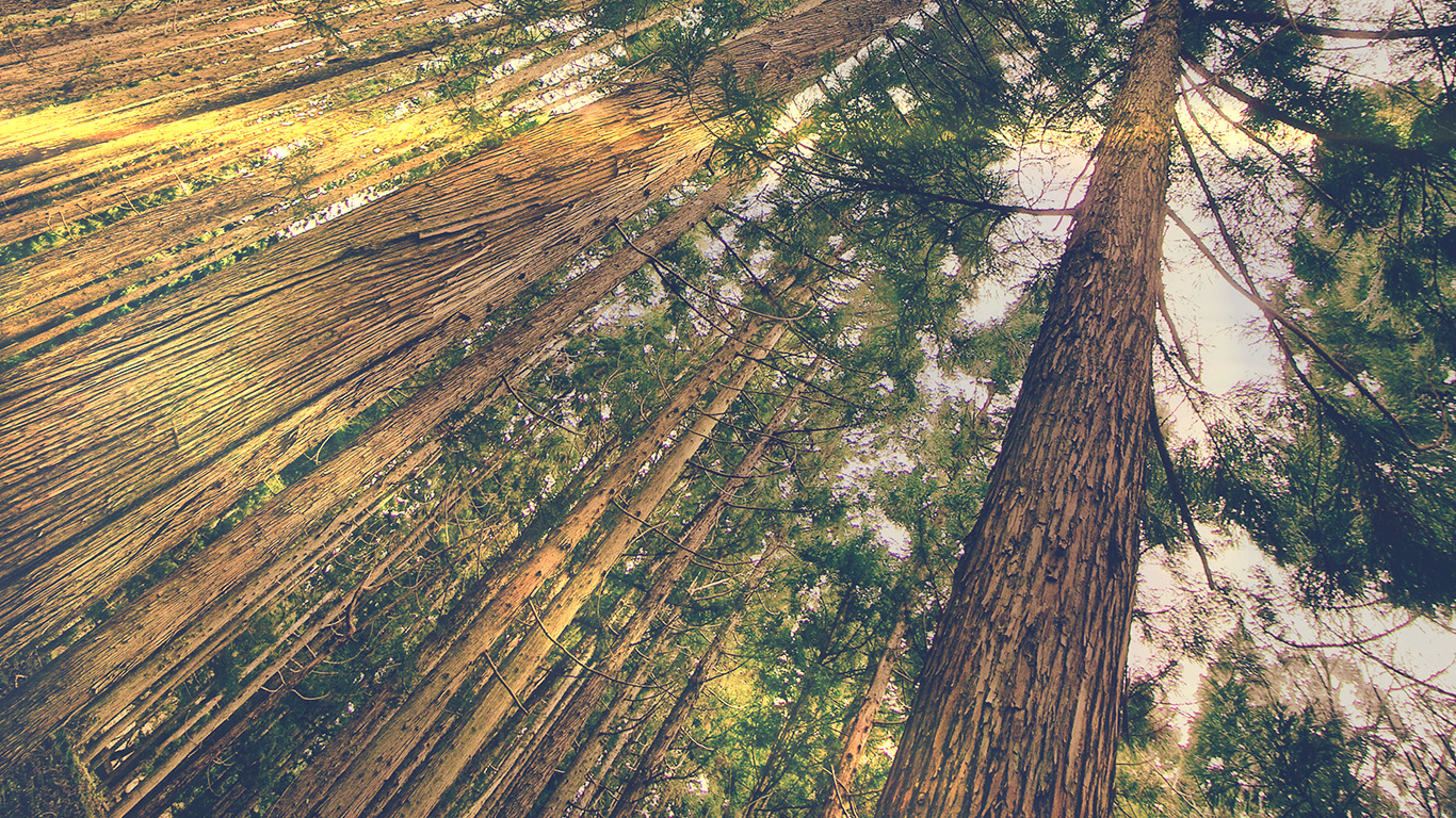 desktop-wallpaper-laptop-mac-macbook-airmn45-in-forest-tall-tree-flare-green-kim-daniel-nature-wallpaper