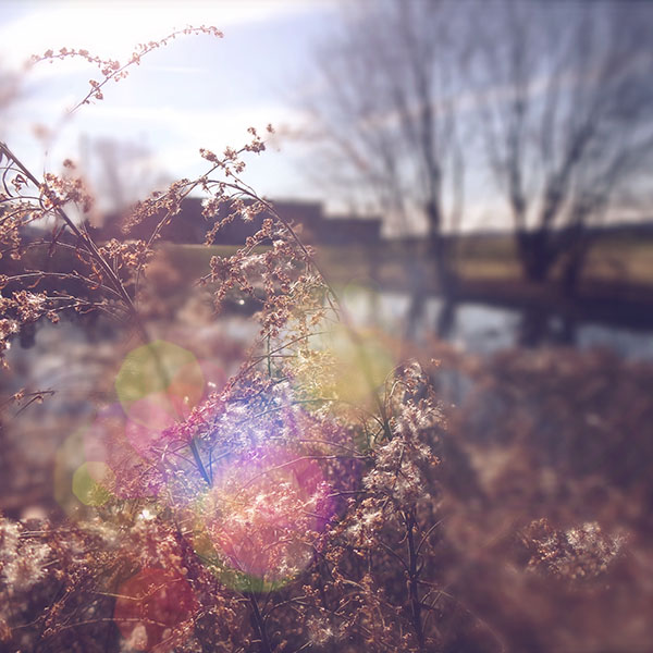 iPapers.co-Apple-iPhone-iPad-Macbook-iMac-wallpaper-mn73-sad-day-flower-nature-flare-wallpaper
