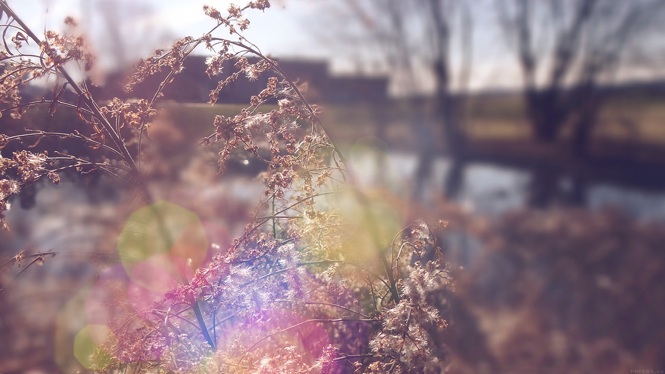 desktop-wallpaper-laptop-mac-macbook-airmn73-sad-day-flower-nature-flare-wallpaper