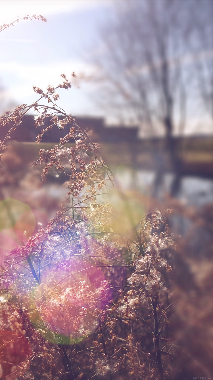 iPhone6papers.co-Apple-iPhone-6-iphone6-plus-wallpaper-mn73-sad-day-flower-nature-flare