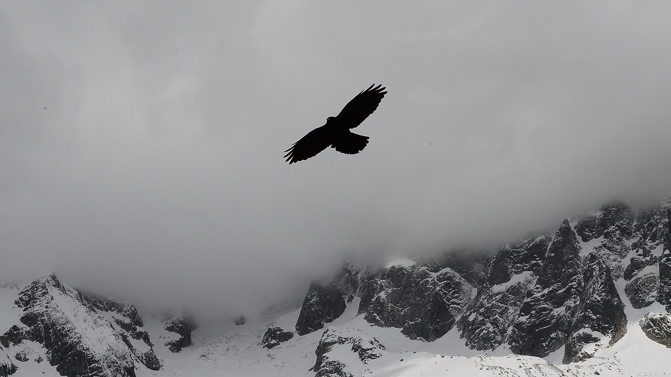 desktop-wallpaper-laptop-mac-macbook-airmn78-julia-revitt-eagle-mountain-winter-snow-nature-animal-wallpaper