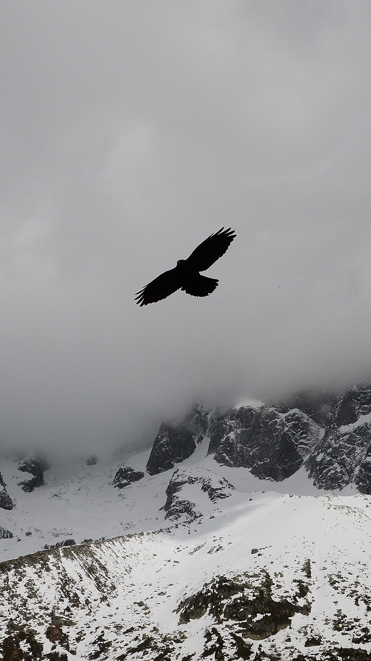iPhone6papers.co-Apple-iPhone-6-iphone6-plus-wallpaper-mn78-julia-revitt-eagle-mountain-winter-snow-nature-animal