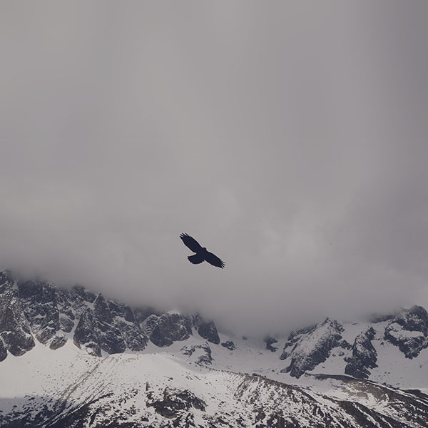 iPapers.co-Apple-iPhone-iPad-Macbook-iMac-wallpaper-mn79-julia-revitt-eagle-blue-mountain-winter-snow-nature-animal-wallpaper