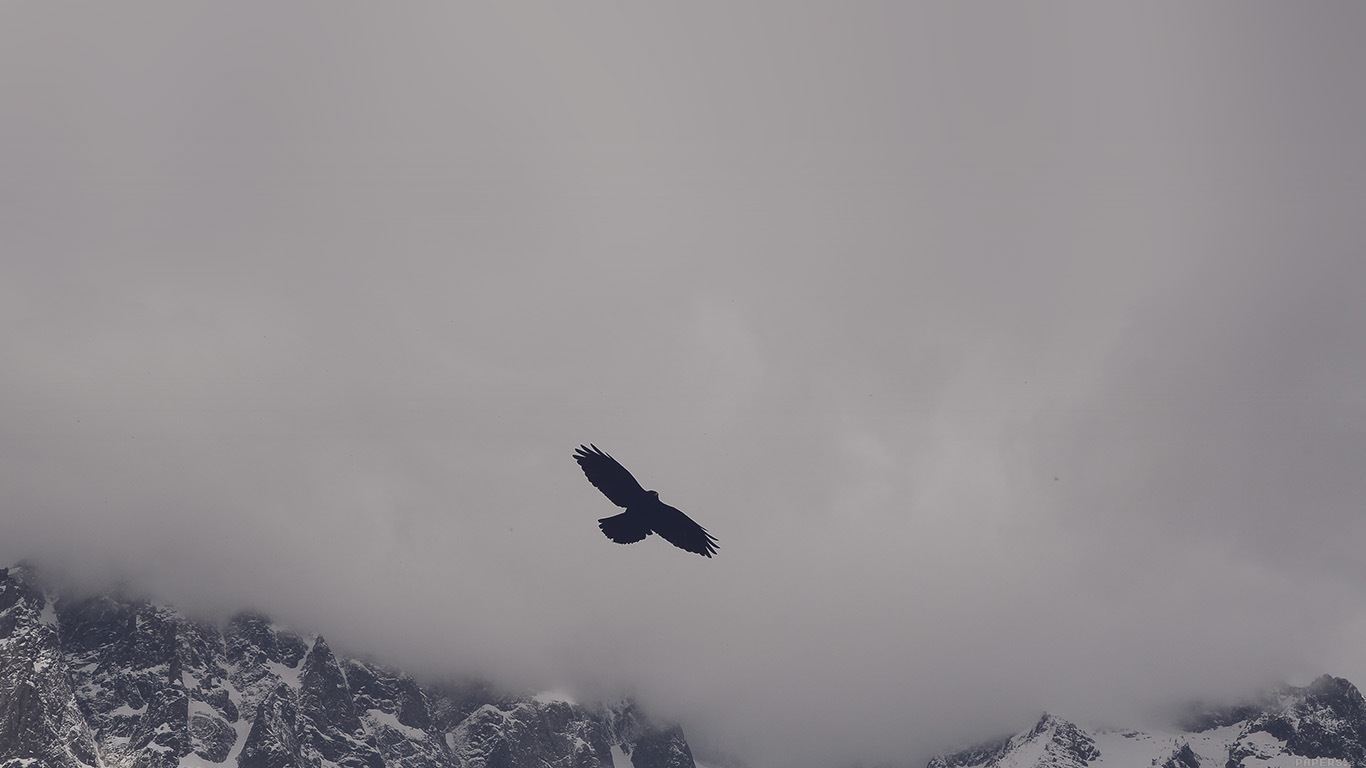 desktop-wallpaper-laptop-mac-macbook-airmn79-julia-revitt-eagle-blue-mountain-winter-snow-nature-animal-wallpaper