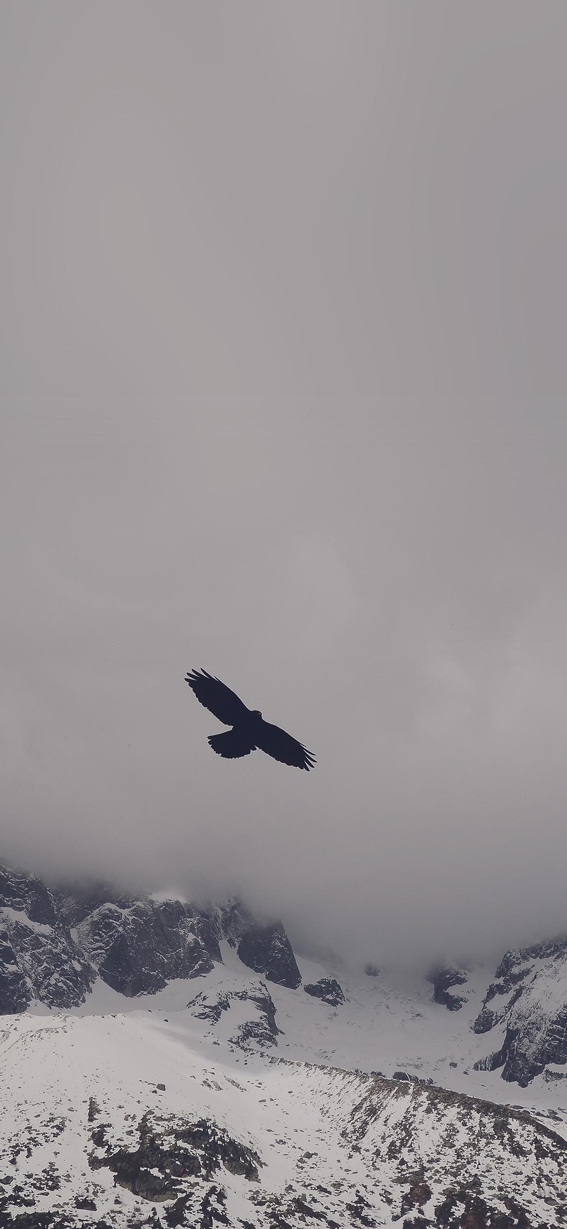 Iphonexpapers Mn79 Julia Revitt Eagle Blue Mountain Winter Snow Nature Animal