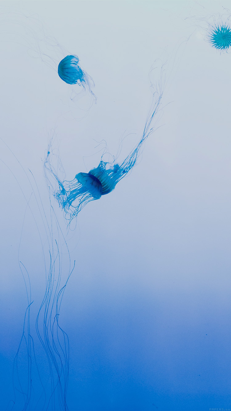 iPhone6papers.co-Apple-iPhone-6-iphone6-plus-wallpaper-mn81-Jellyfish-sea-animal-by-lance-anderson-nature