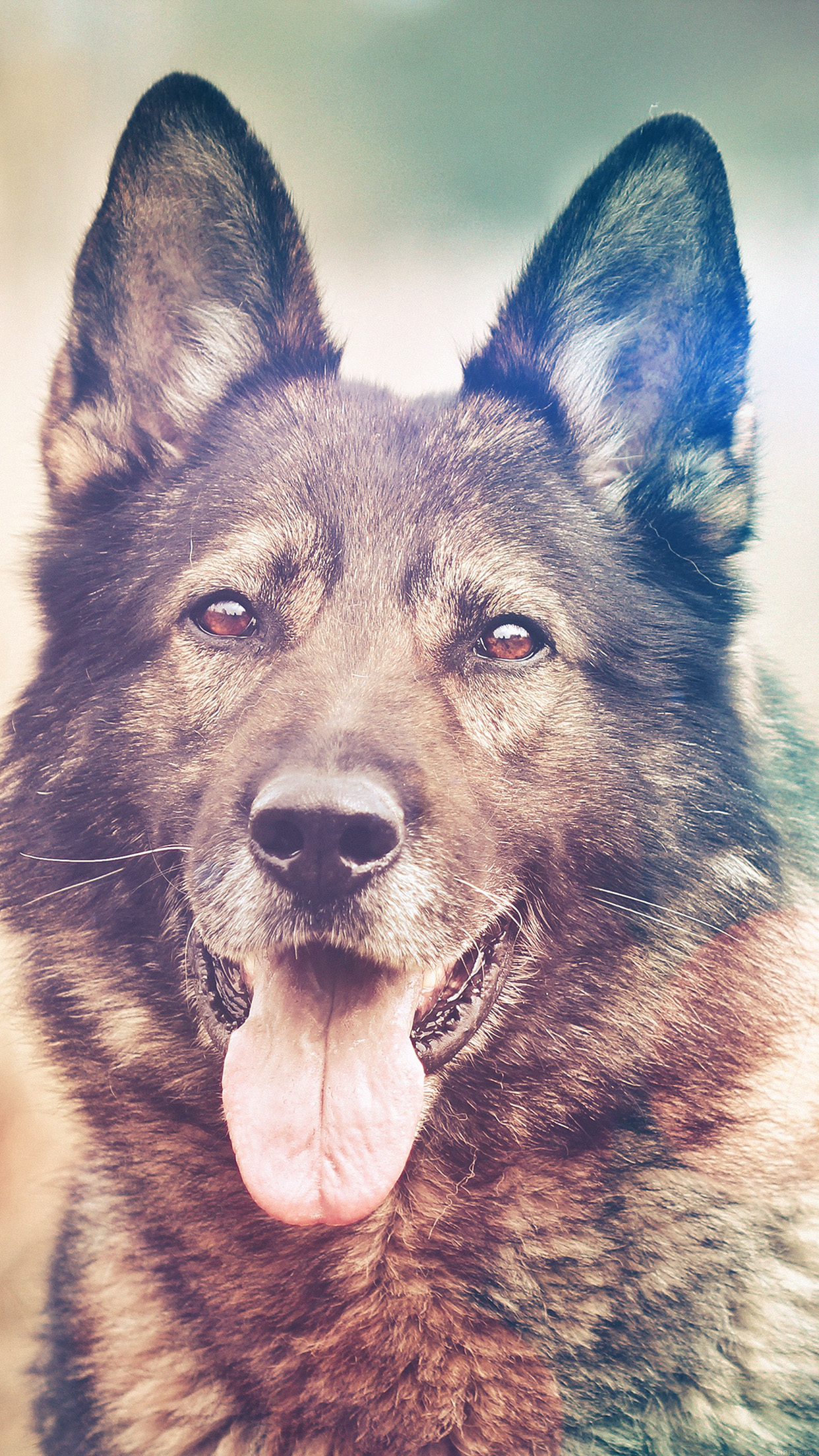 iphone7papers - mo06-my-shepherds-dog-flare-smile-animal-nature