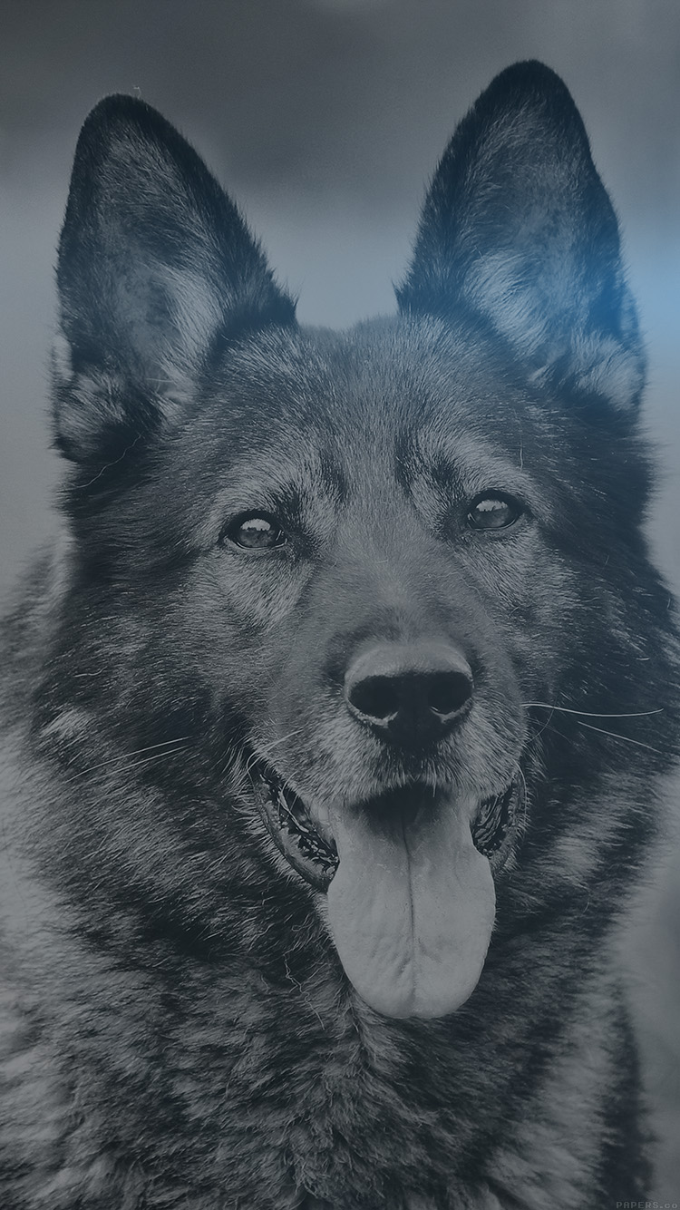 iPhonepapers.com-Apple-iPhone8-wallpaper-mo07-my-shepherds-dog-blue-flare-smile-animal-nature