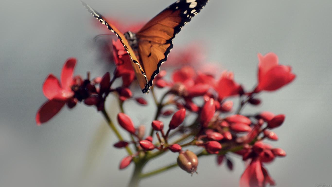 desktop-wallpaper-laptop-mac-macbook-airmo08-nature-butterfly-flower-red-wallpaper
