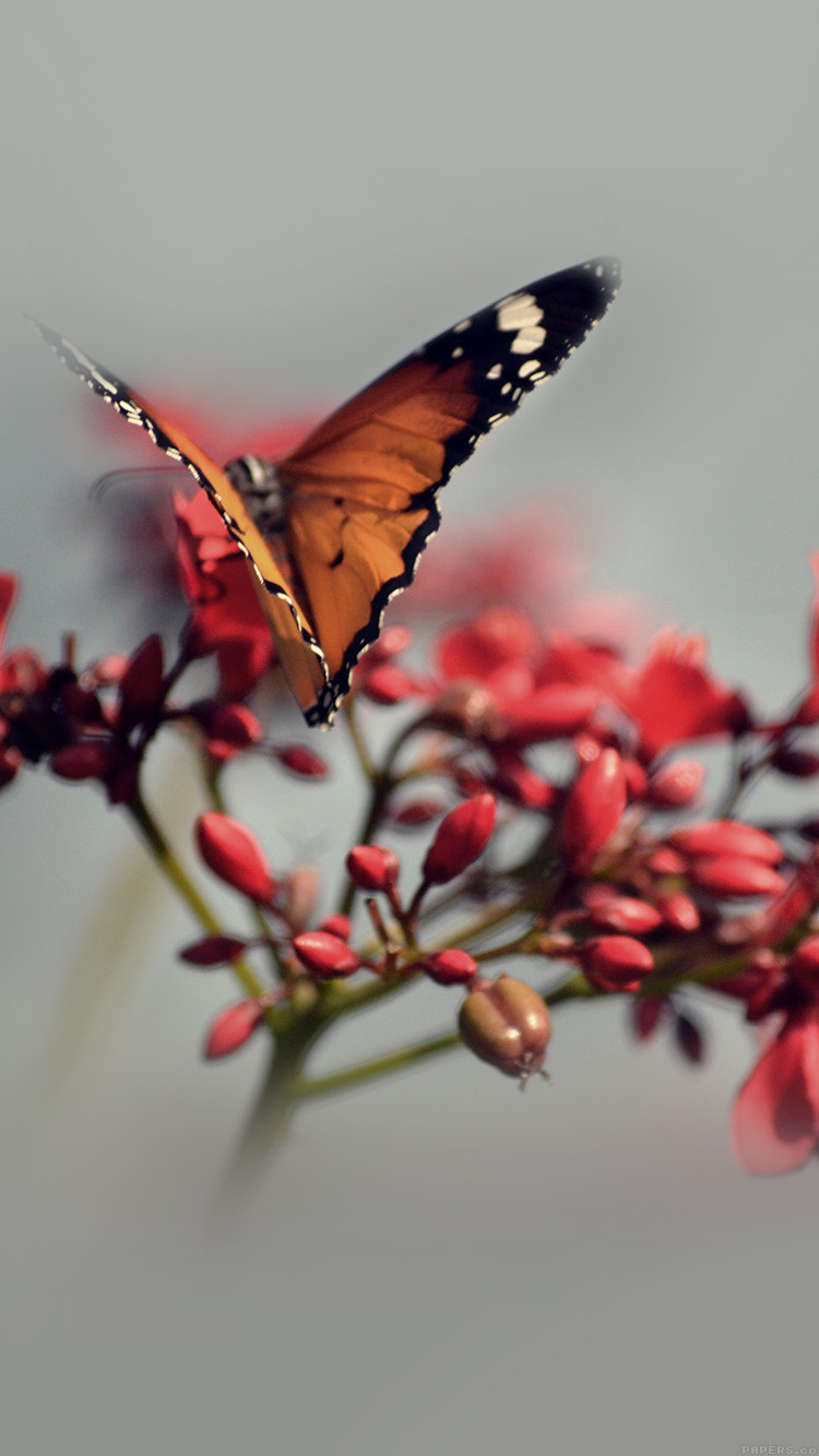 iPhone6papers.co-Apple-iPhone-6-iphone6-plus-wallpaper-mo08-nature-butterfly-flower-red