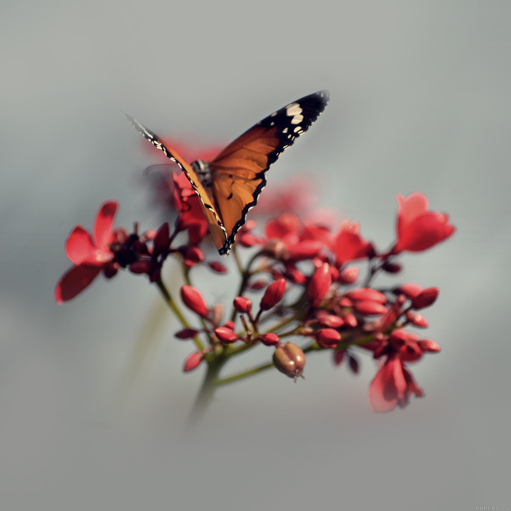 android-wallpaper-mo08-nature-butterfly-flower-red-wallpaper