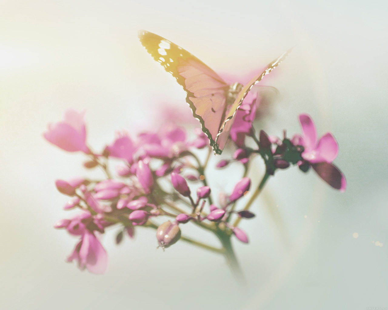 """butterflies in summertime essay Free summer time papers, essays,  in this essay i will tell you about my plane  time of the butterflies - time of the butterflies """"life is what you."""