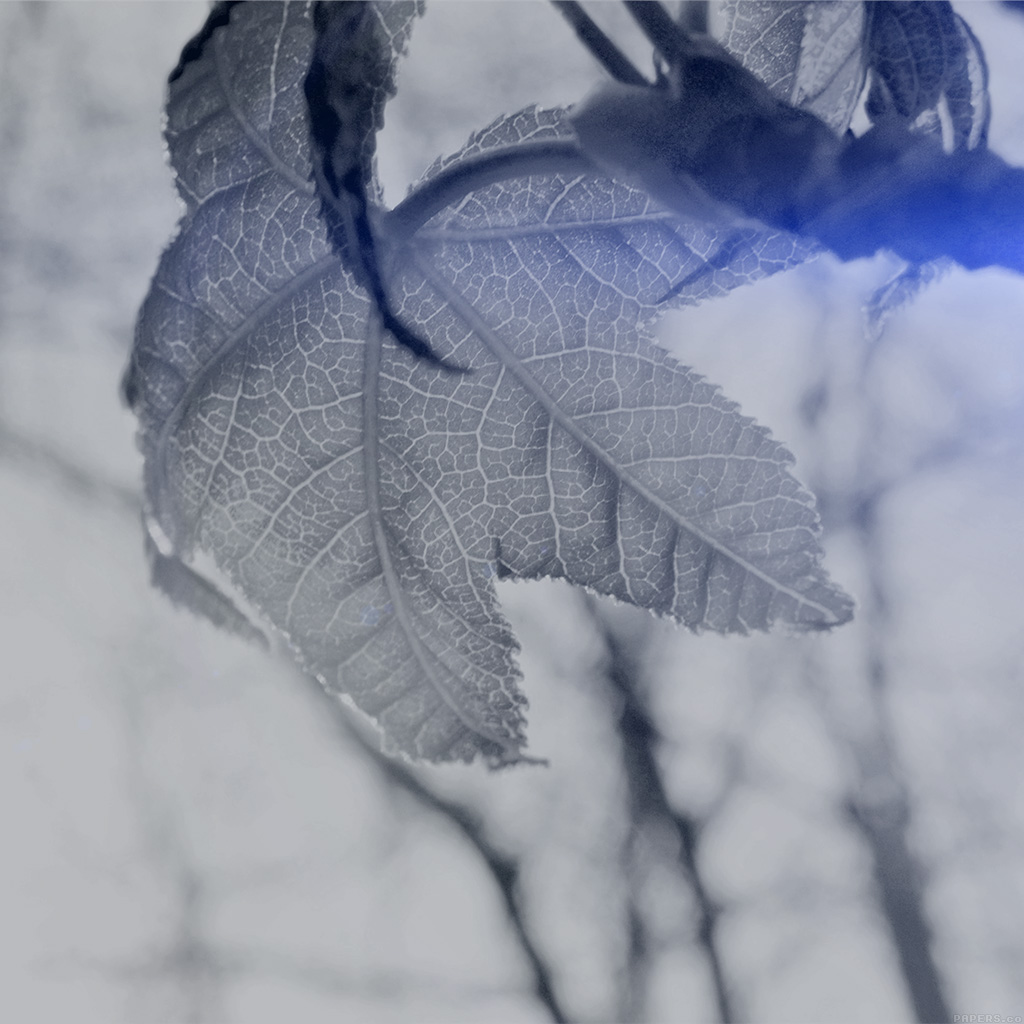 wallpaper-mo29-leaf-nature-tree-dark-blue-shine-ben-moore-wallpaper