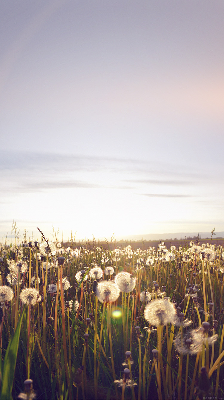 iPhone6papers.co-Apple-iPhone-6-iphone6-plus-wallpaper-mo33-nature-love-flower-flare-dandelion