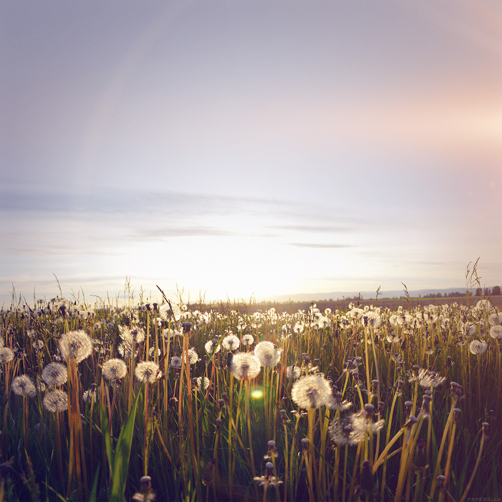 Papersco Android Wallpaper Mo33 Nature Love Flower Flare Dandelion