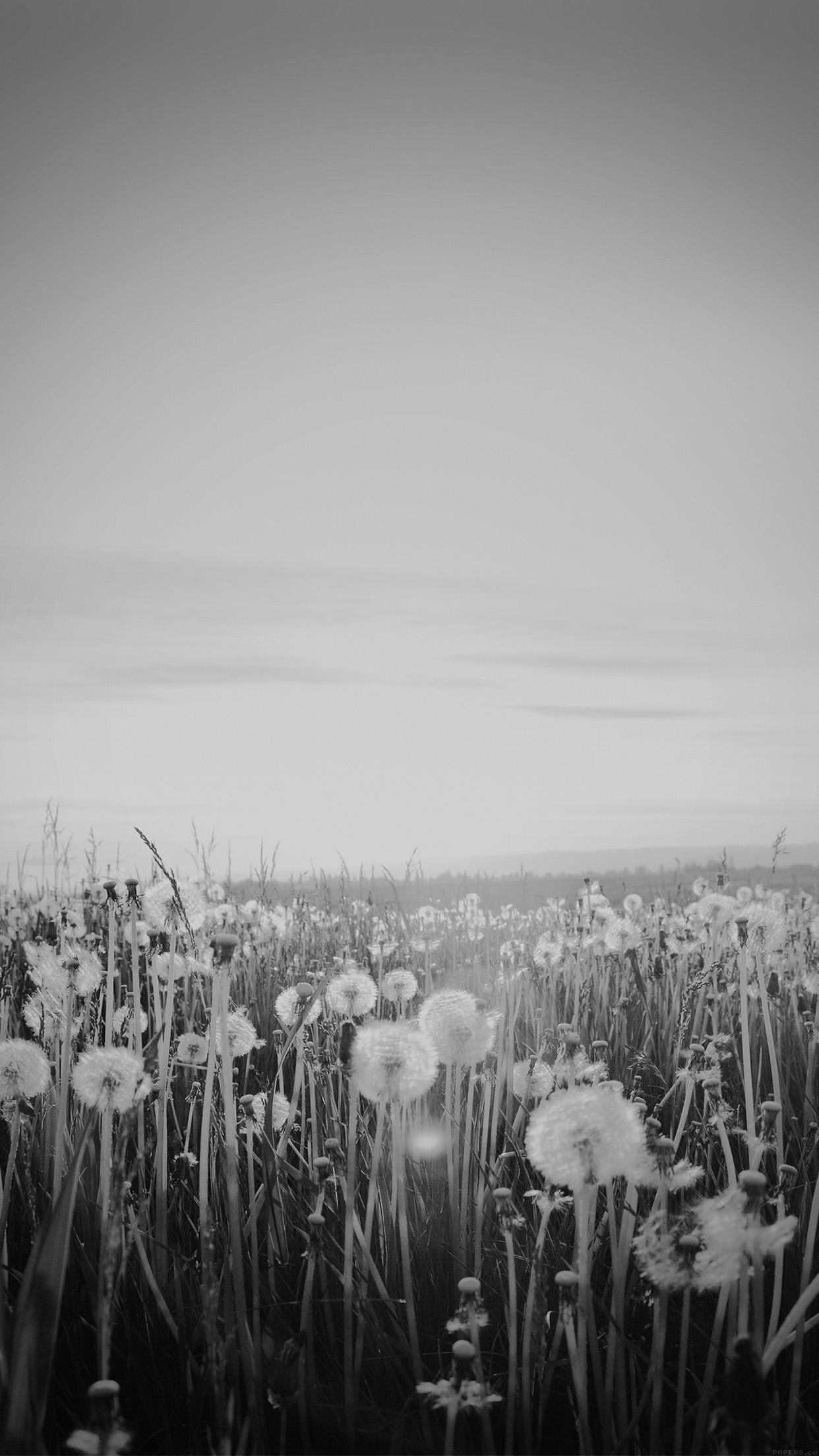 Mo34 Nature Love Flower Dark Dandelion Wallpaper