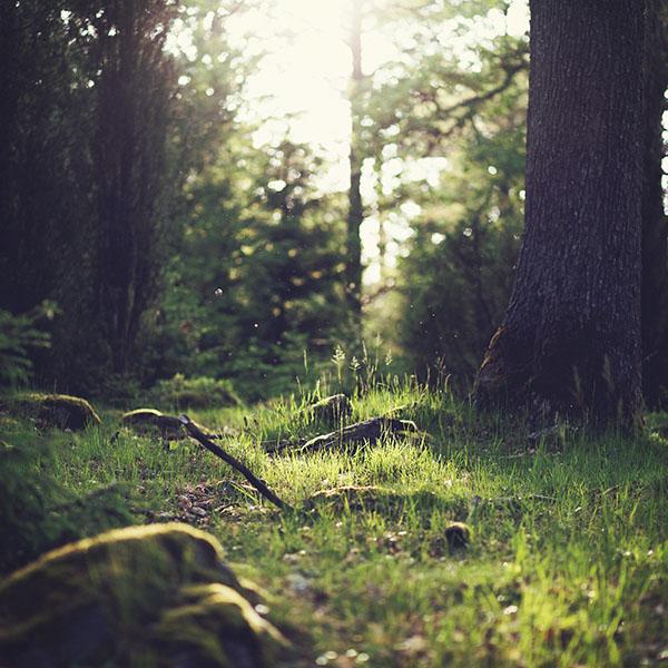 iPapers.co-Apple-iPhone-iPad-Macbook-iMac-wallpaper-mo50-forest-green-nature-tree-jonas-nilsson-lee-wallpaper