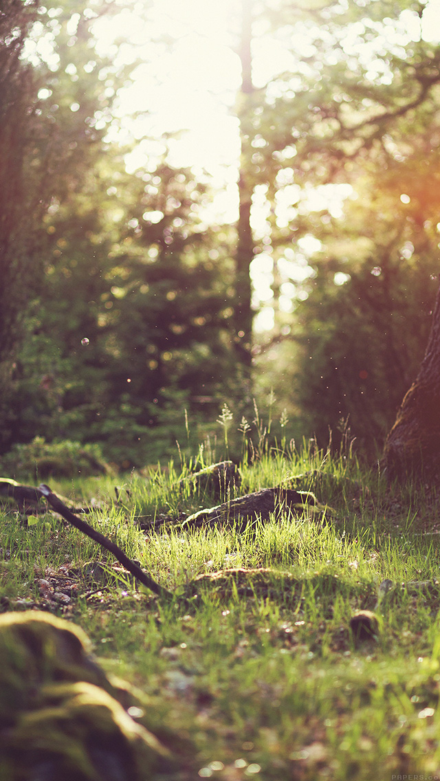 freeios8.com-iphone-4-5-6-plus-ipad-ios8-mo51-forest-green-nature-tree-flare-jonas-nilsson-lee