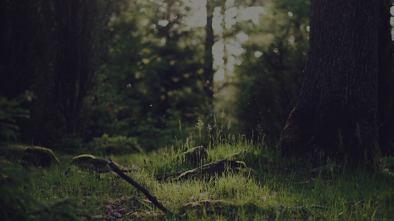 desktop-wallpaper-laptop-mac-macbook-air-mo52-forest-green-nature-tree-dark-jonas-nilsson-lee-wallpaper